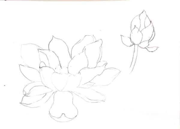 蓮の花のデッサン