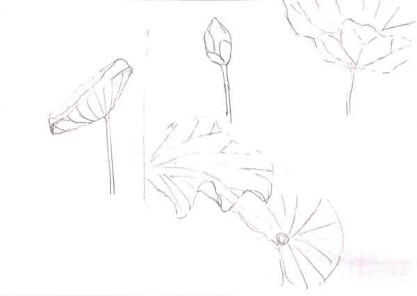 蓮の葉のデッサン