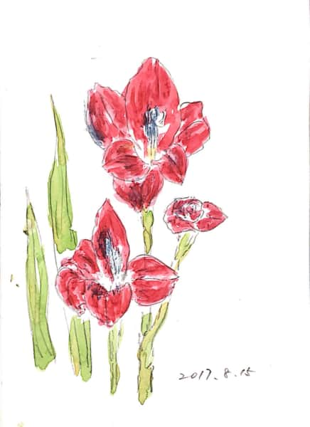 グラジオラスの花
