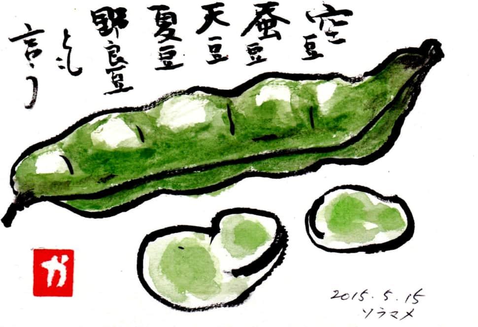 空豆 蚕豆 天豆 夏豆 野良豆とも言う ソラマメ