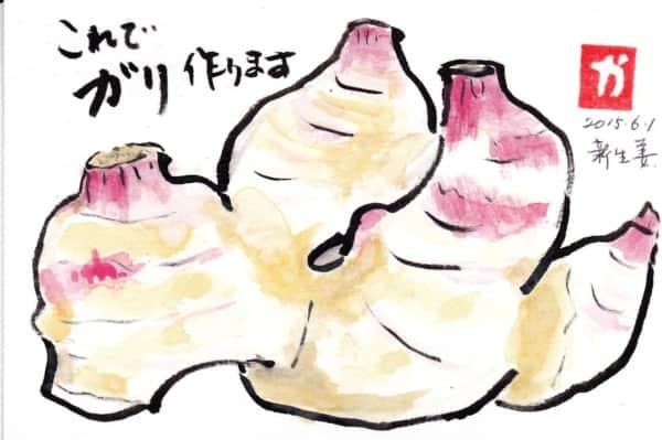 これでガリ作ります 新生姜