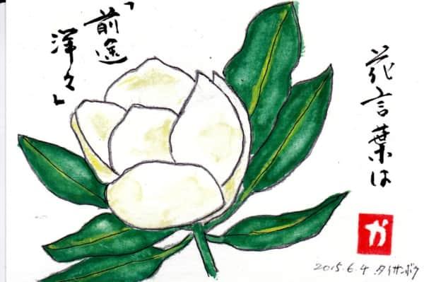 泰山木 花言葉は前途洋々