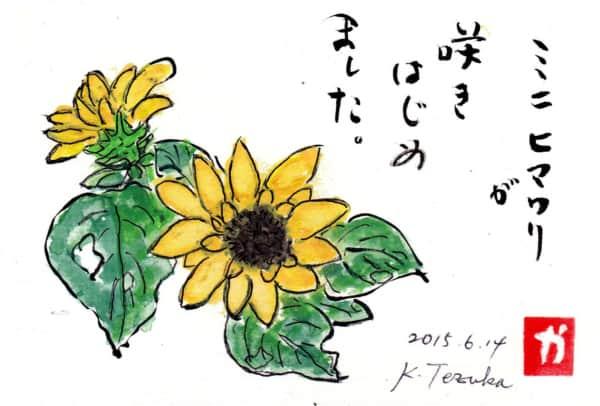 ミニヒマワリが咲きはじめました。