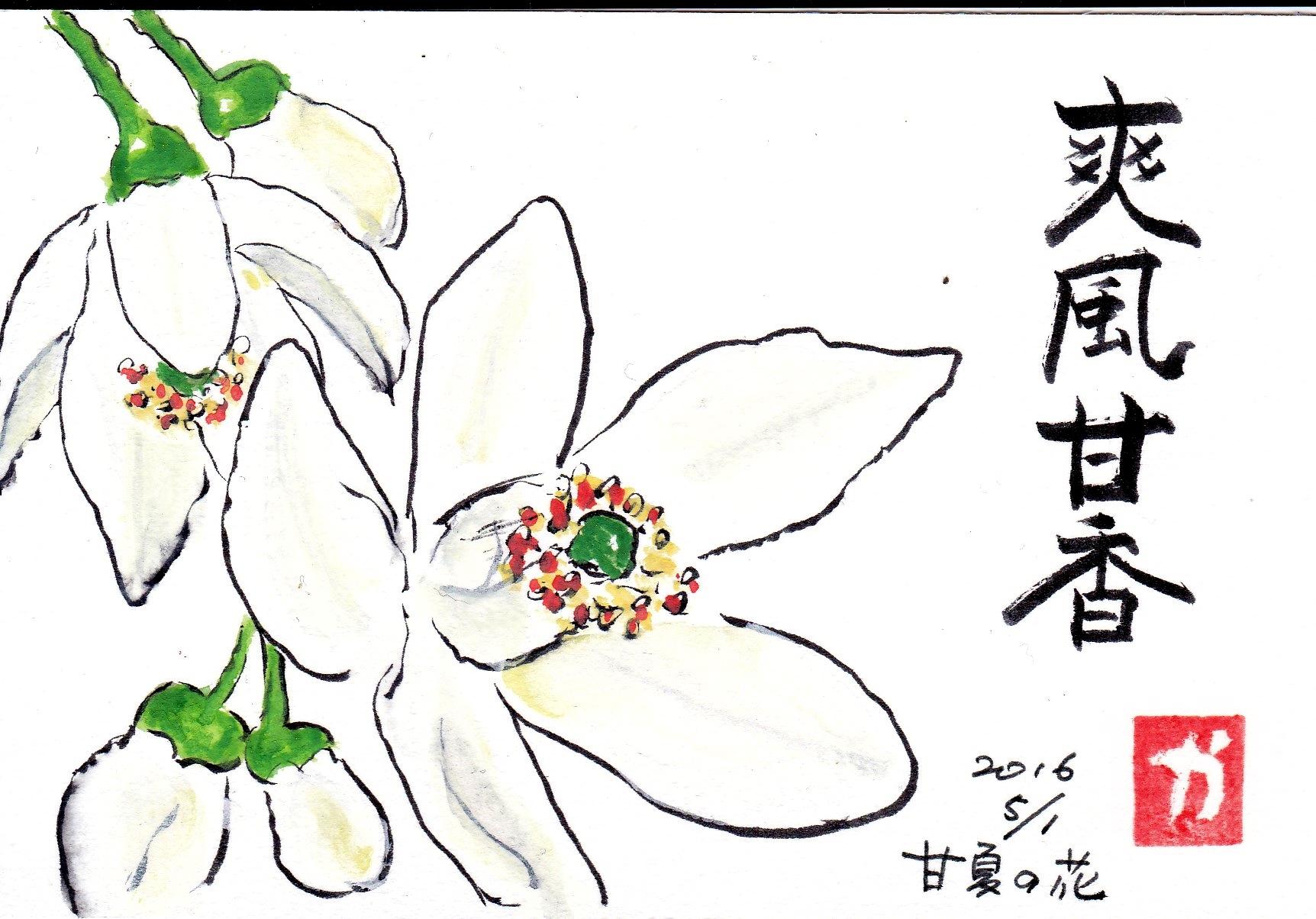 爽風甘香 〜甘夏の花〜