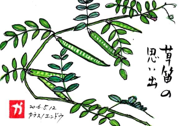草笛の思い出 〜カラスノエンドウ〜