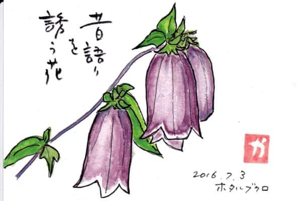 昔語りを誘う花〜ホタルブクロ〜