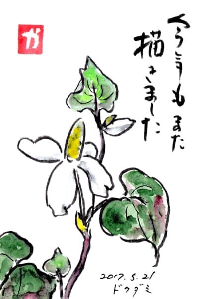 今年もまた咲きました 〜ドクダミの花〜