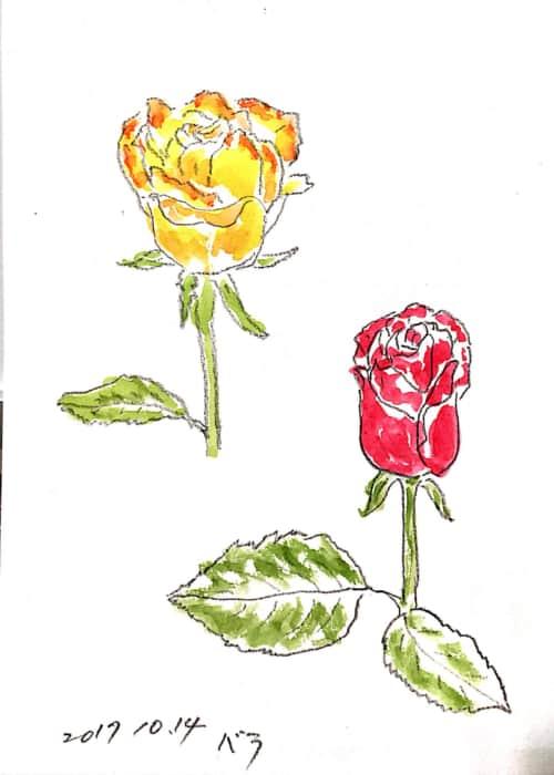 黄色と赤いバラのデッサン
