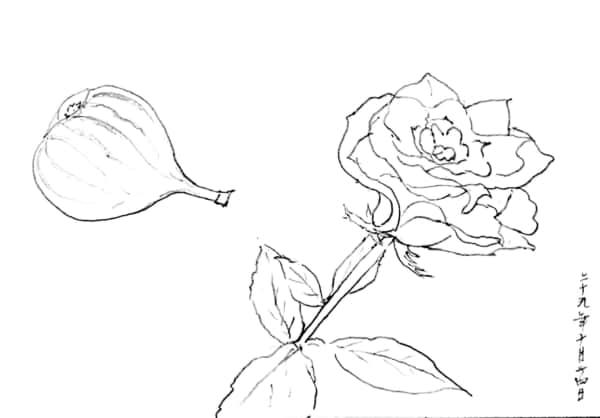バラの花とイチジクのデッサン