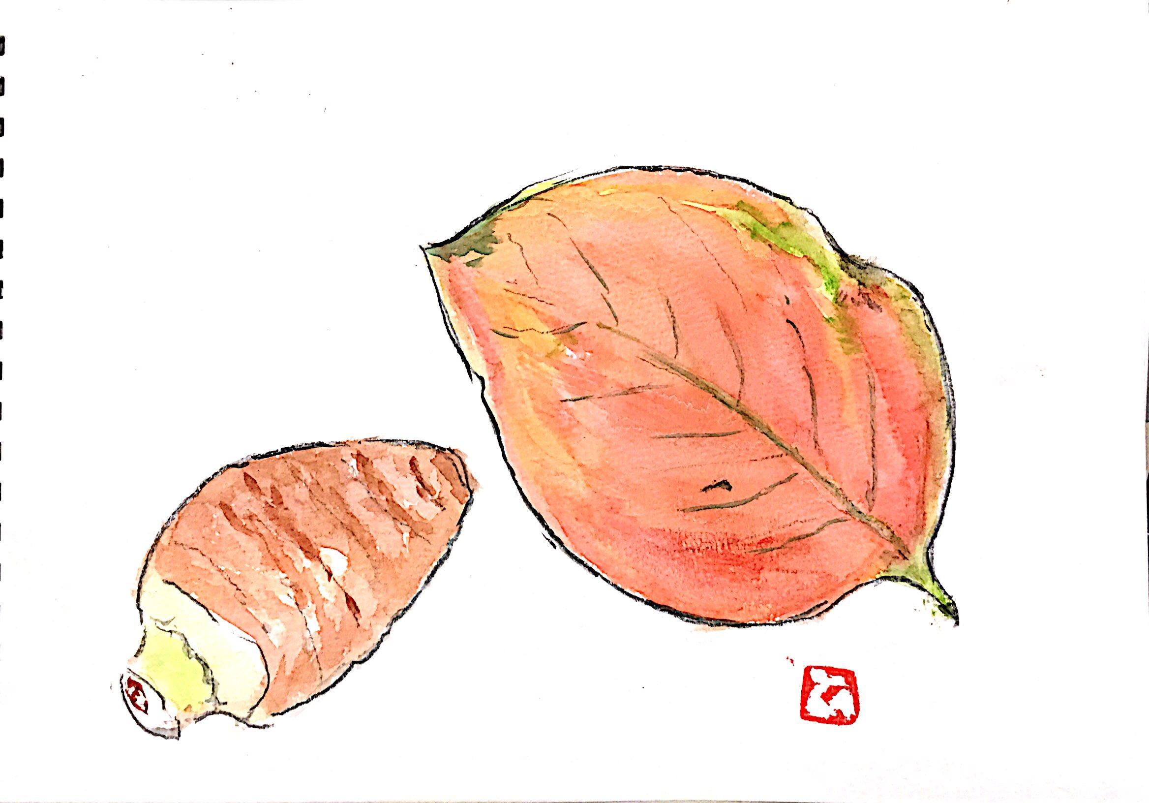 里芋と枯れ葉