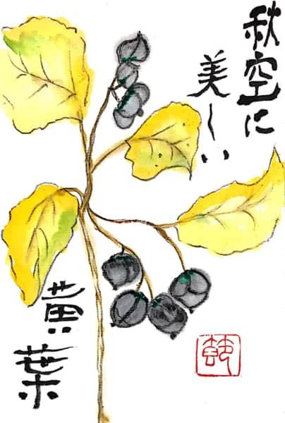秋空に美しい黄葉