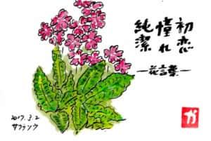 サクラソウの花と花言葉の絵手紙