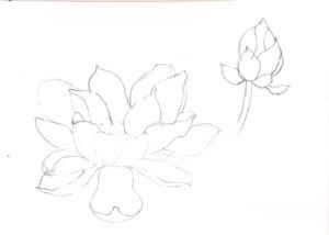 蓮の花の絵手紙デッサン
