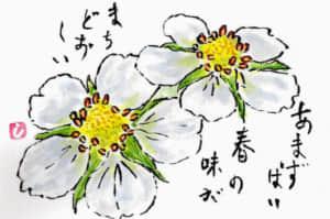 春の苺の花の絵手紙
