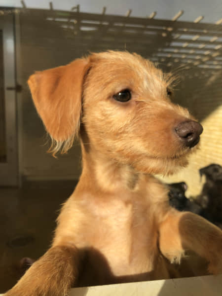 二足で立つ子犬の絵手紙モチーフ写真