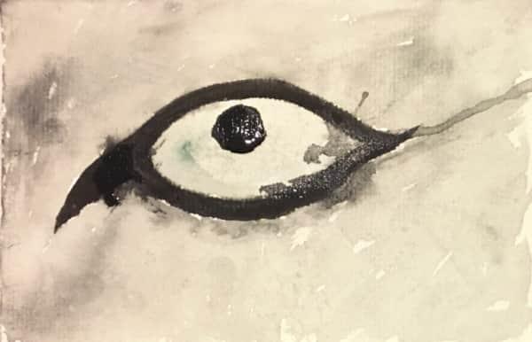 シベリアンハスキー犬の目
