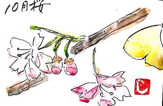 10月桜と銀杏の葉