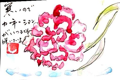 いつまでも咲いているカーネーション