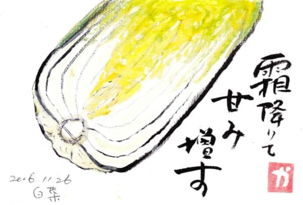 霜降りて甘み増す〜白菜〜