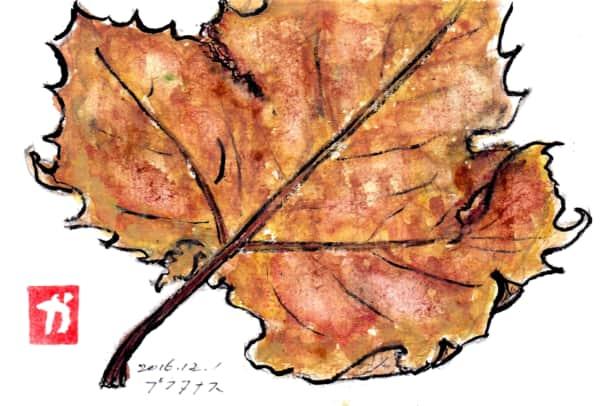 プラタナスの落葉