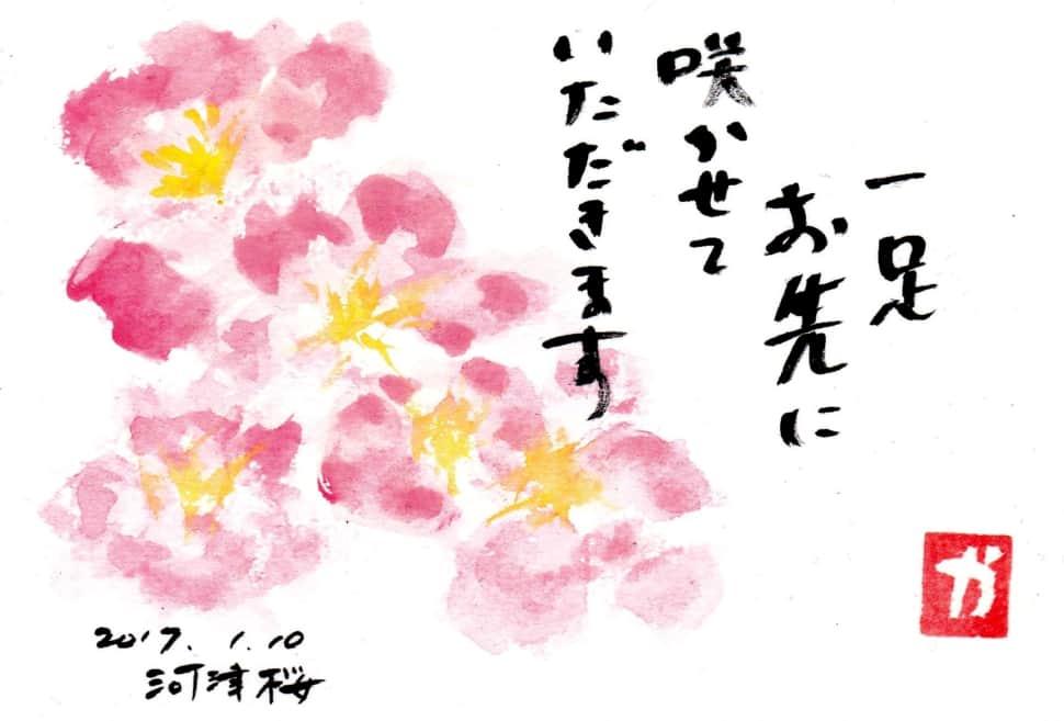 一足お先に咲かせていただきます〜河津桜〜