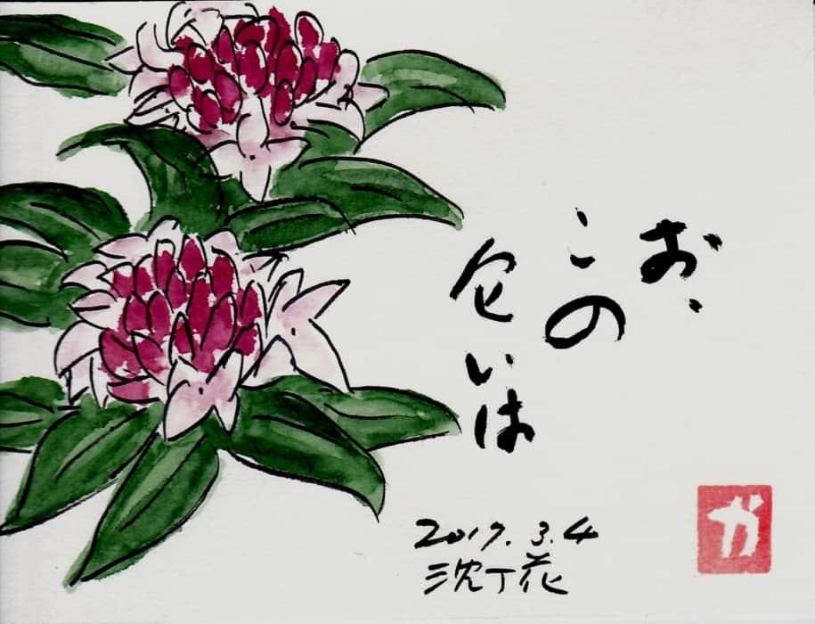 お、この匂いは〜沈丁花〜