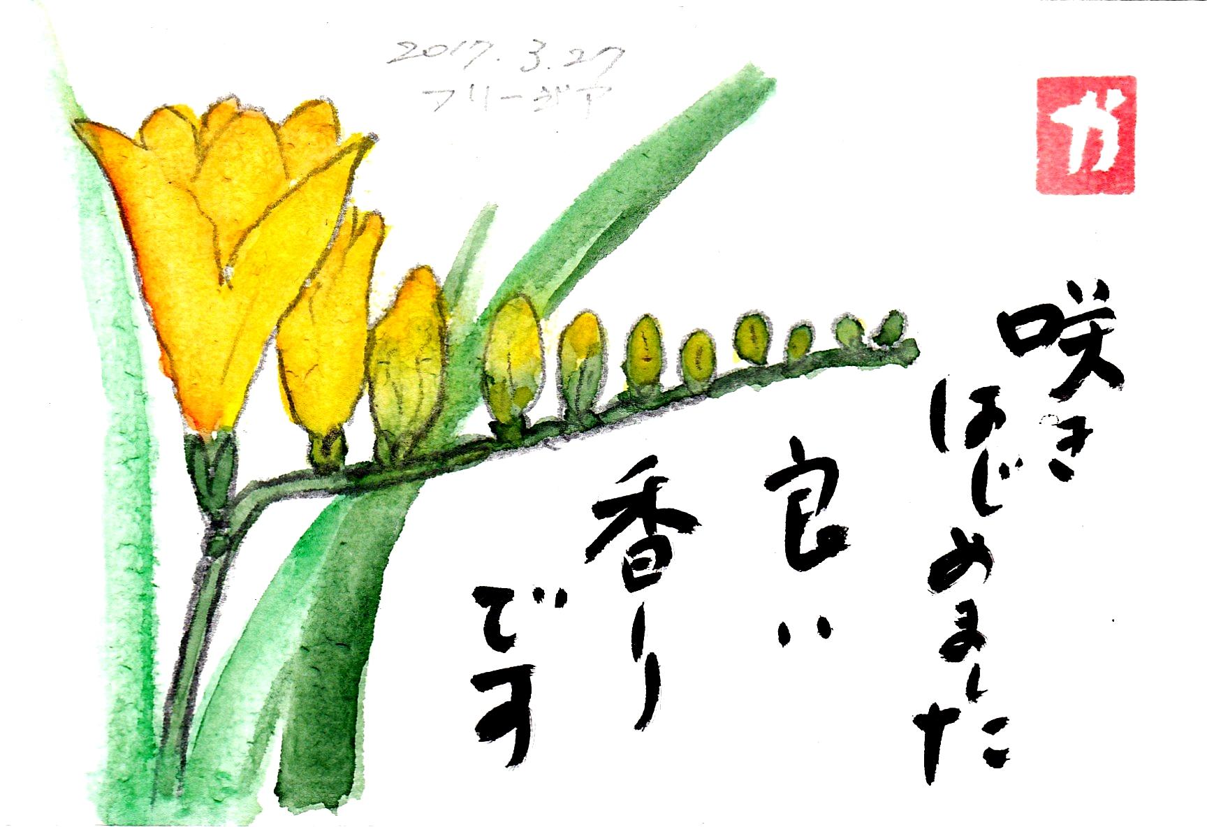 咲きはじめました 良い香りです〜フリージア〜