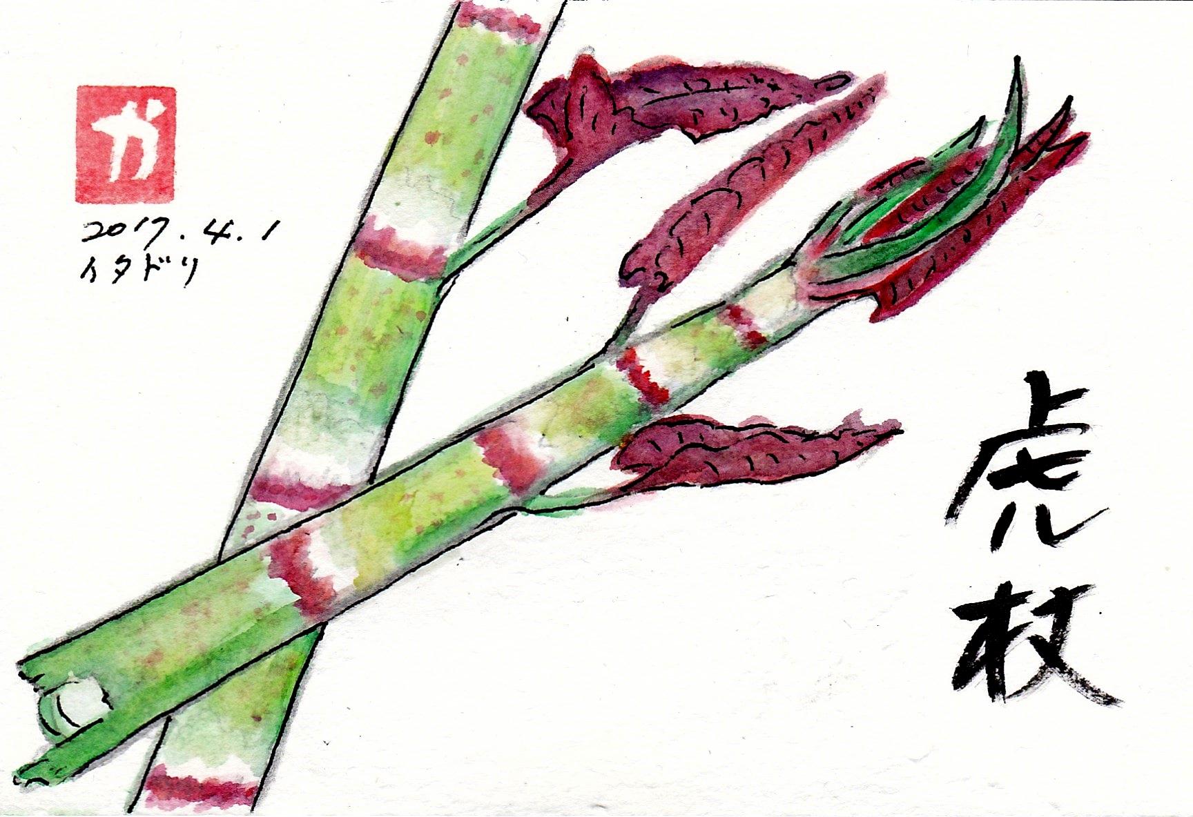虎杖〜イタドリ〜