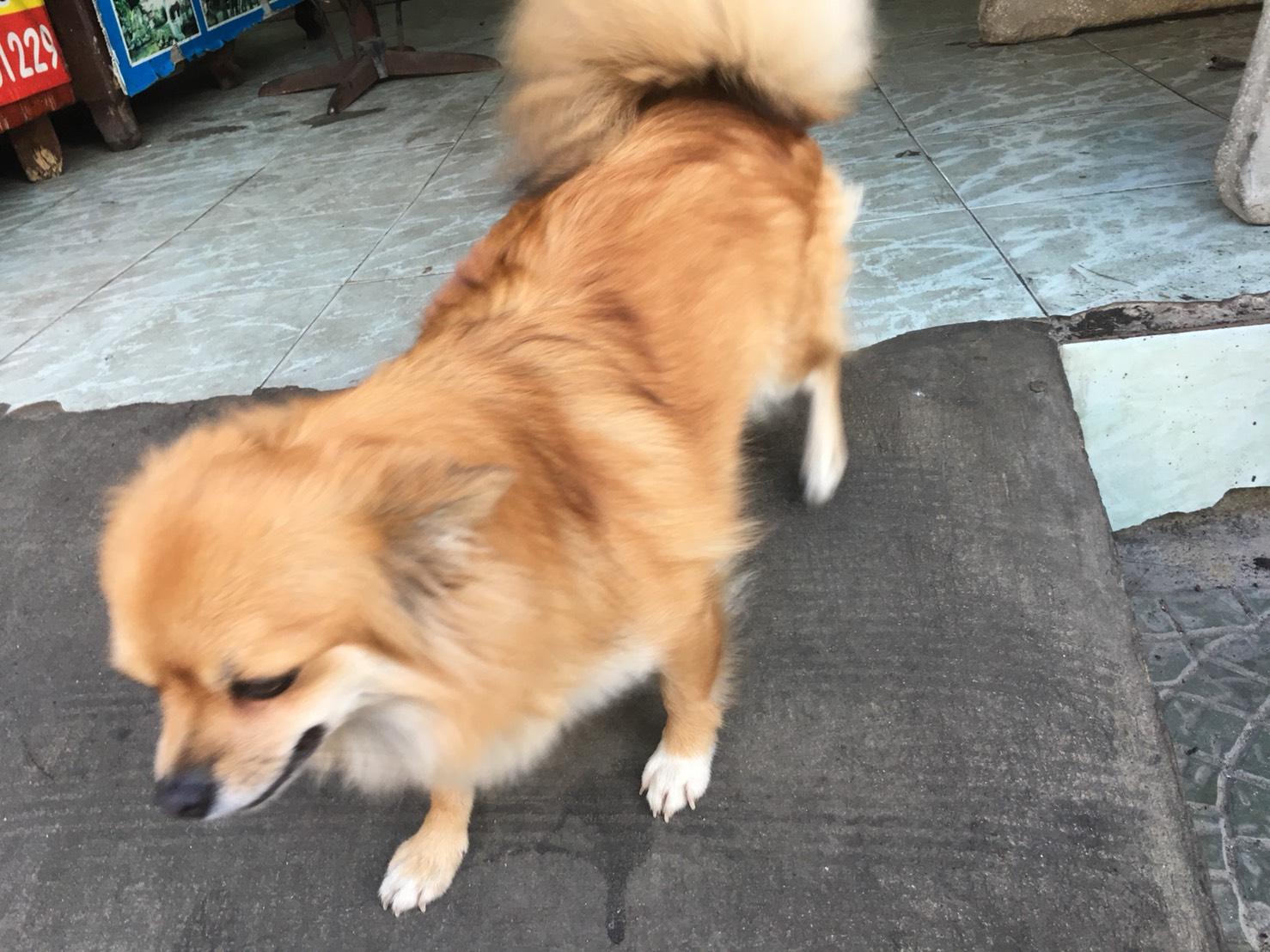 尻尾を振るミックス犬の絵手紙モチーフ写真