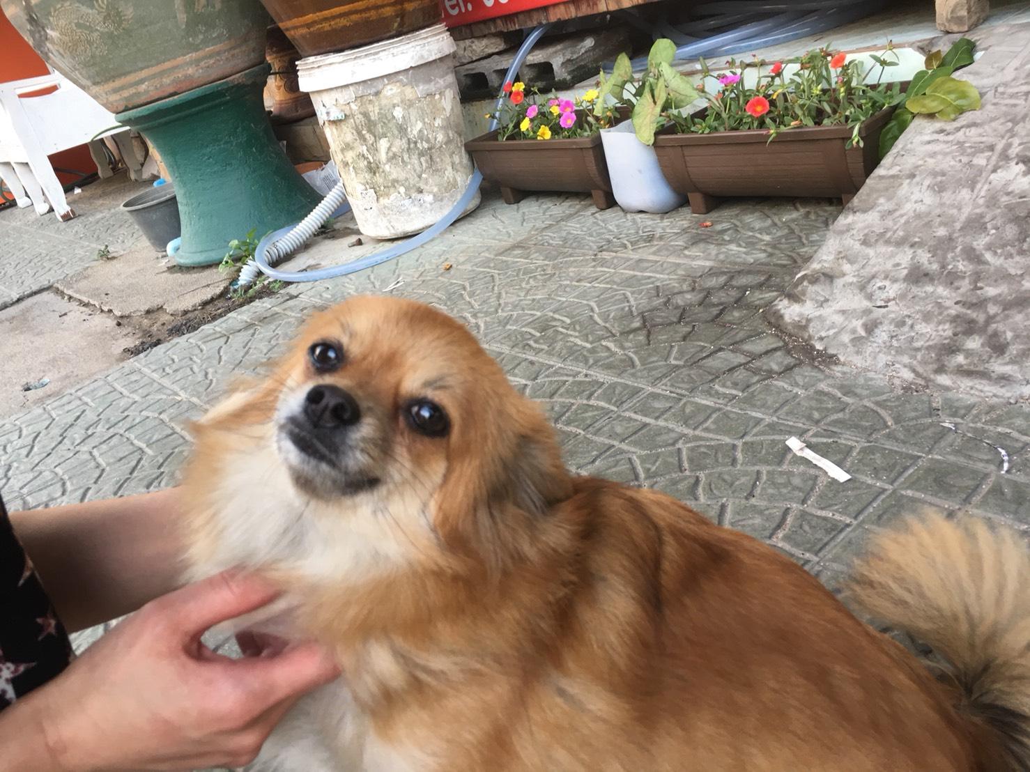 カメラ目線のミックス犬の絵手紙