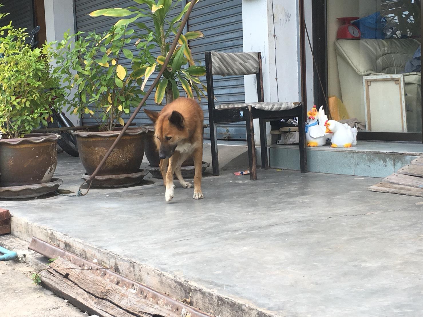 歩くミックス犬の絵手紙モチーフ写真