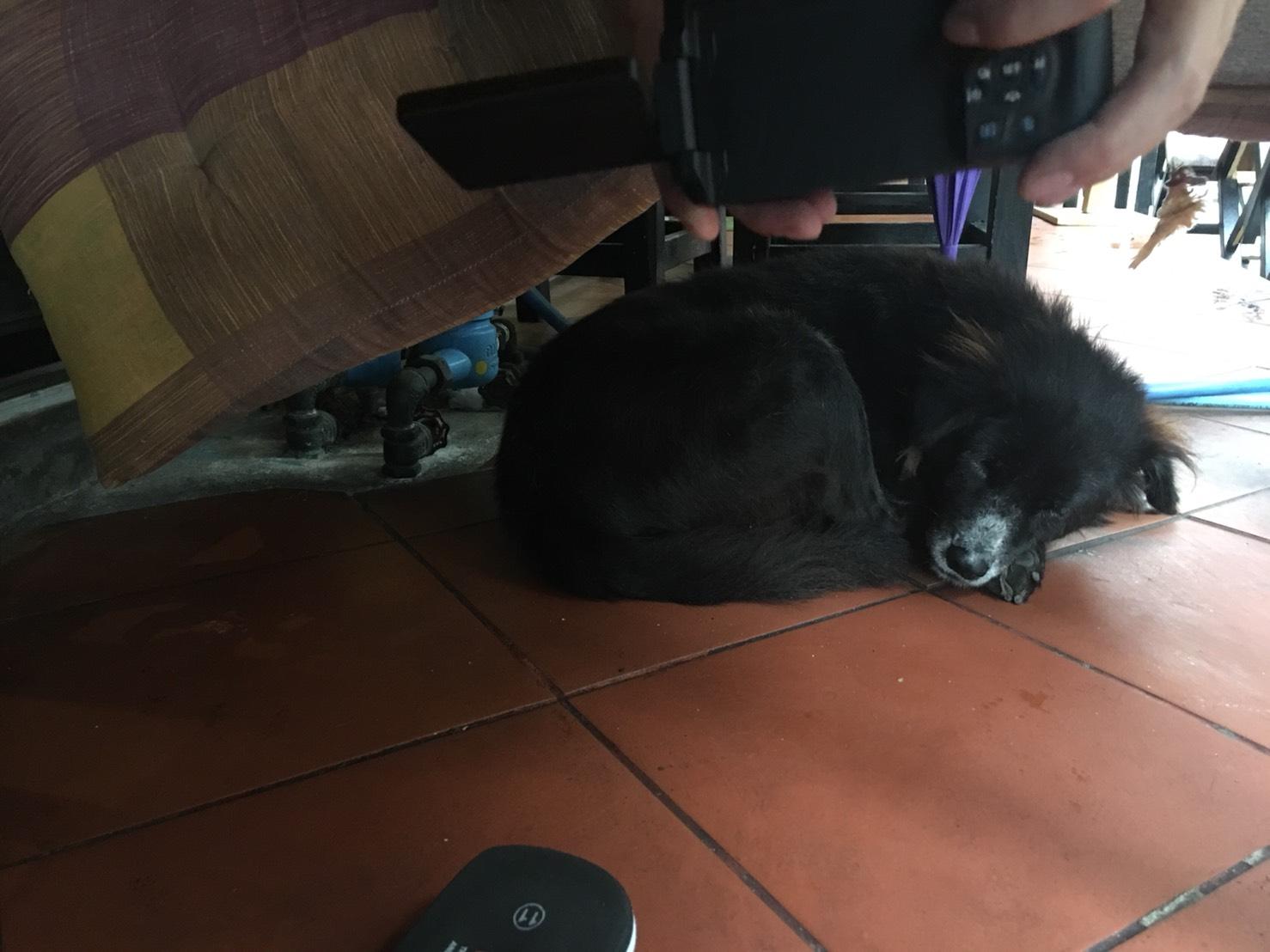 丸くなって眠るミックス犬の絵手紙モチーフ写真