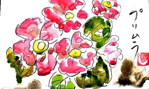 ピンクのプリムラ