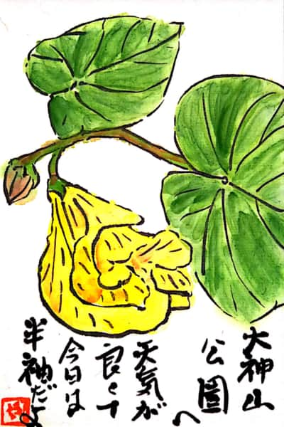 大神山公園へ 今日は天気が良くて半袖だよ〜オオハマボウの花〜