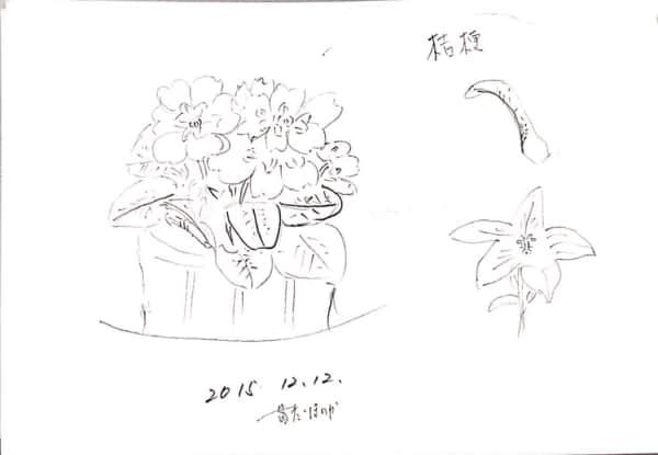 ジュリアン(プリムラ)と桔梗のデッサン