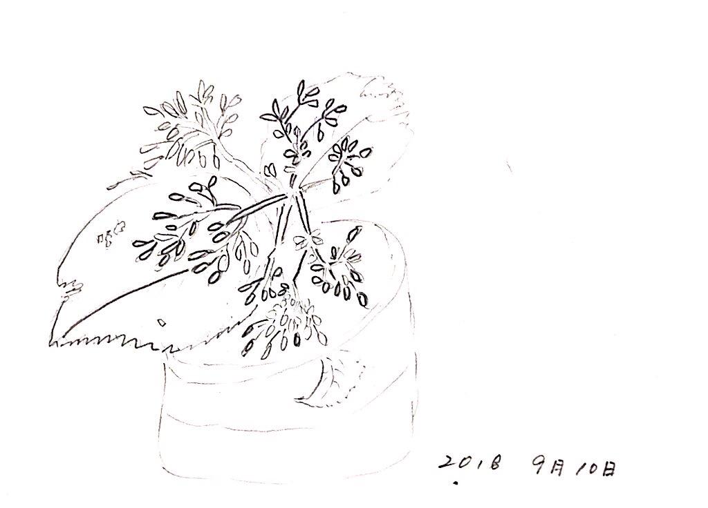 鉢植えの草花のデッサン