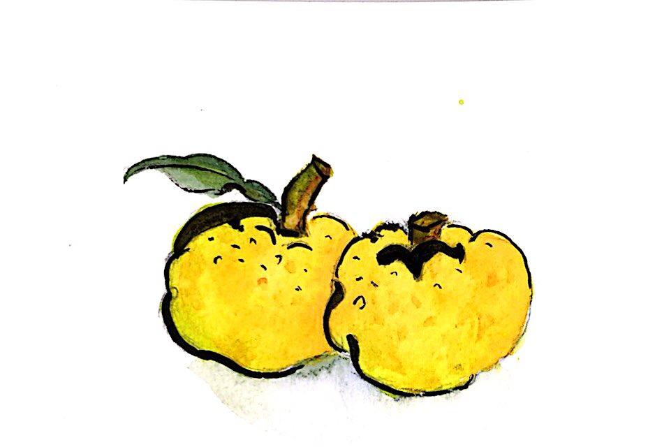 なかよく並んだ柚子の実