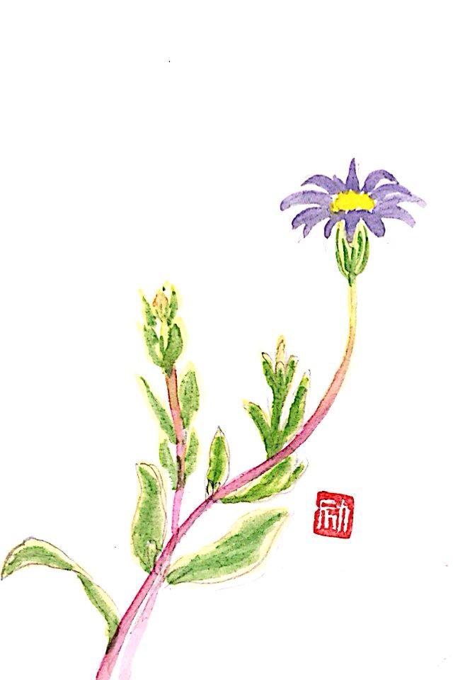 ニ月の花 ブルーデイジー
