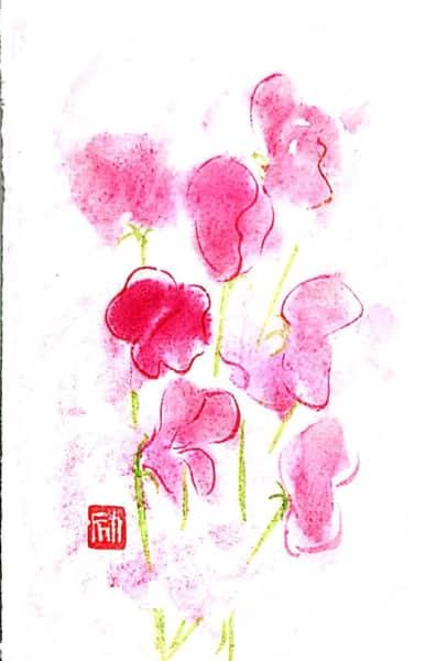 ピンクのスイートピーの花