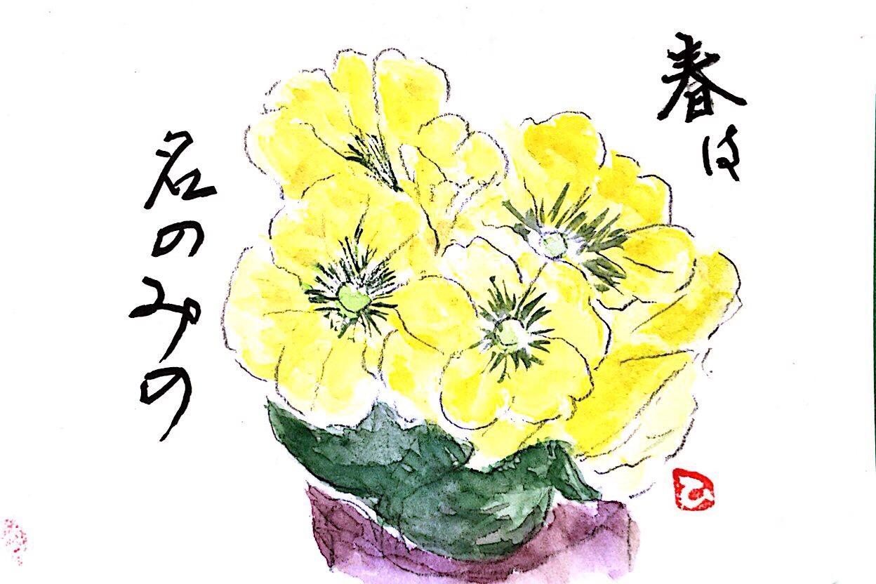 春は名のみの黄色いプリムラジュリアン