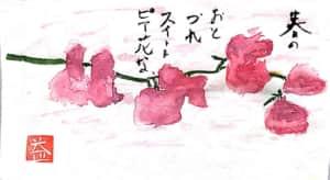 春のおとずれを告げるピンクのスイートピーの花の絵手紙