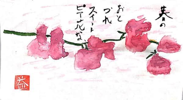 春のおとずれスイートピイの花
