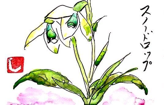 寒い時期に咲くスノードロップ