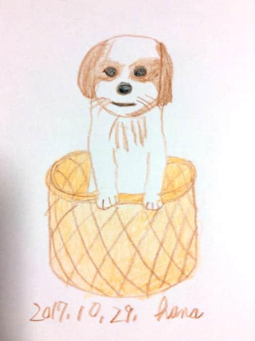 かごの中の犬、ポニ