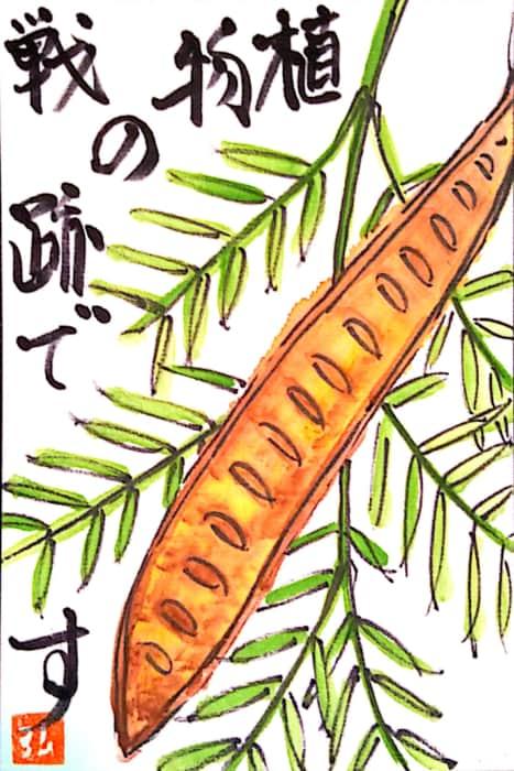 植物の戦跡で 〜ギンネムの実〜