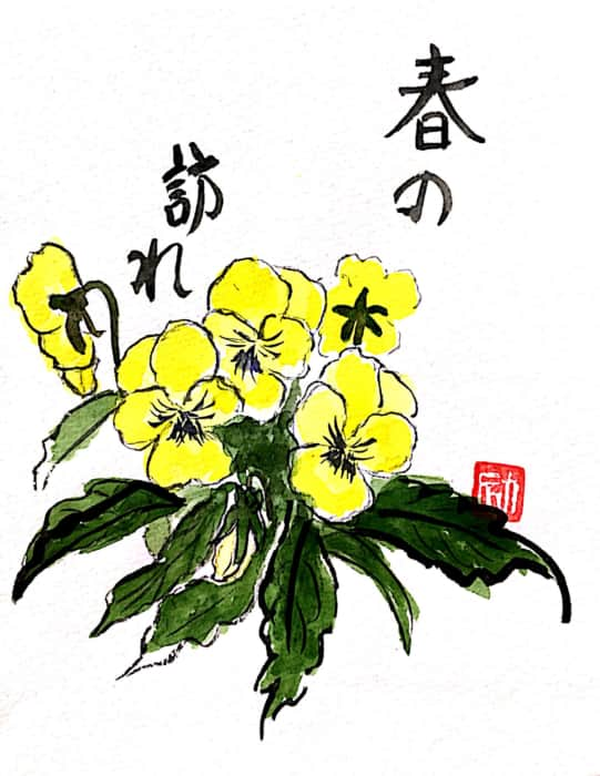 春の訪れ 黄色いパンジーの花