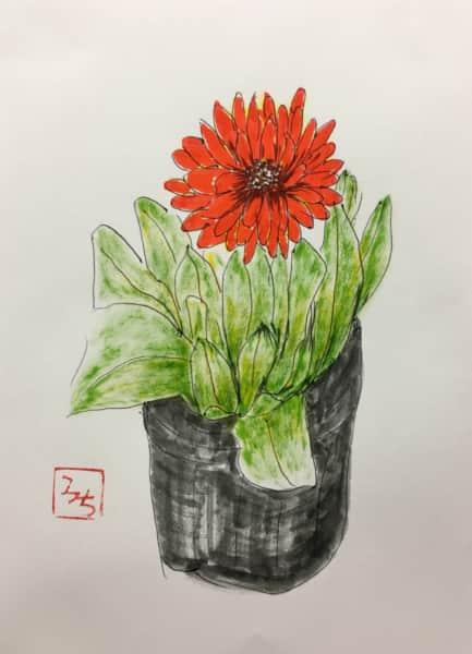 赤いダリアの花