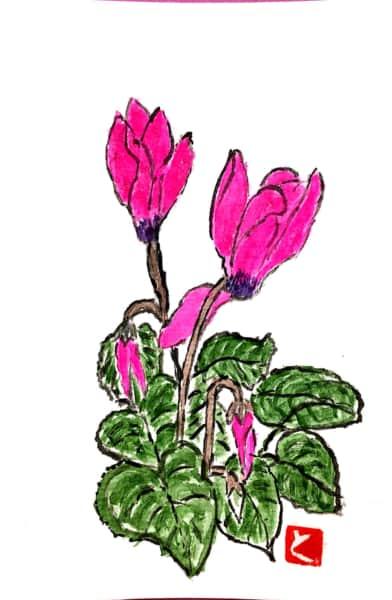 濃いピンクのシクラメンの花