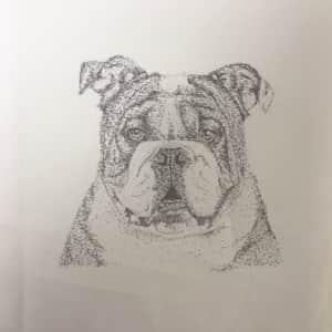 ブルドッグ犬のボールペン画絵手紙
