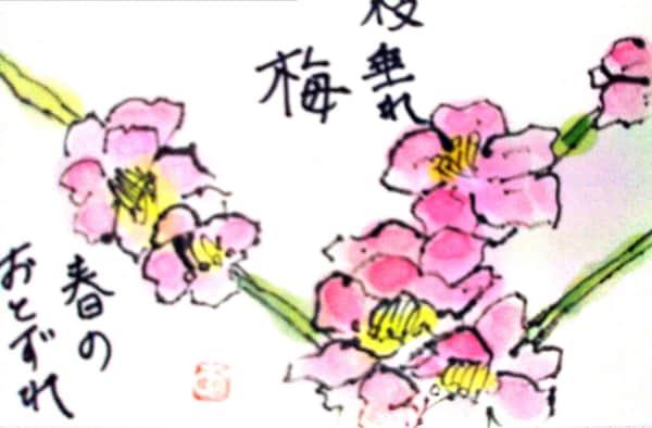 しだれ梅の花